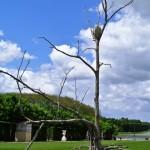 Versailles Gardens, Bronze Tree Sculpture